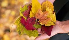 fall-leaves-1010579_640