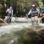 Steelhead Trout Flourish After California American Water Removes San Clemente Dam