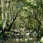 Monterey Aquifer Storage and Recovery Program Breaks All-Time Record