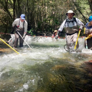 Steelhead Trout Flourish After California American Water Removes San Clemente Dam