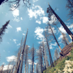 Response to Governor's Wildfires and Climate Change Report Submitted by CWA